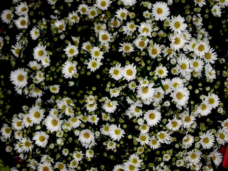 fillers  flowers  prime petals, Beautiful flower